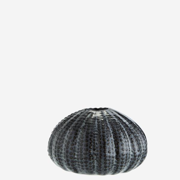 erizo-mar-gris